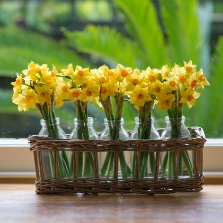 Fresh Daffodils In Mini Glass Bottles In Woven Basket