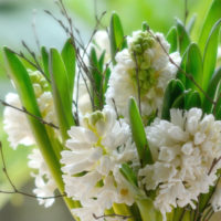 woodland-white-scented-hyacinth-posy