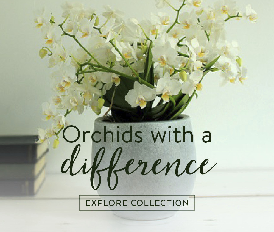 orchids-with-a-difference
