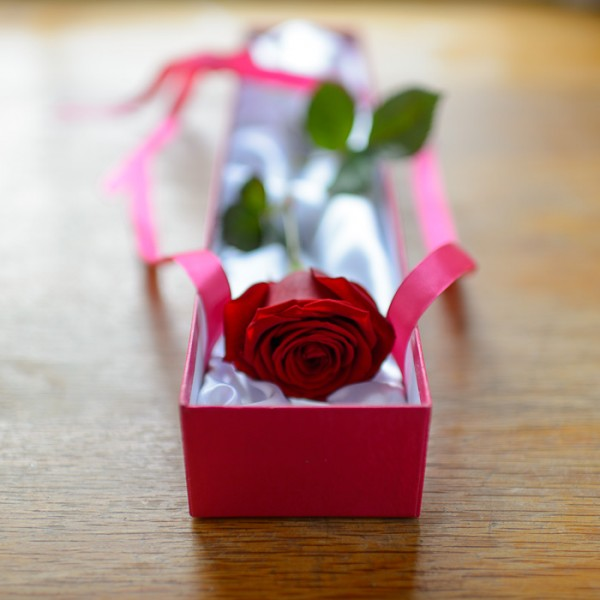 romantic single red rose box