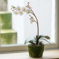 ARTIFICIAL SILK WHITE ORCHID IN MOSS POT