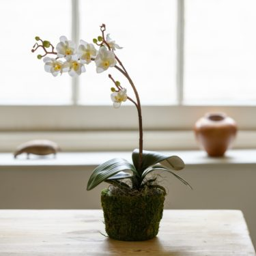 ARTIFICIAL WHITE ORCHID IN MOSS POT