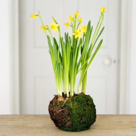 BIRD NEST SPRING BULBS