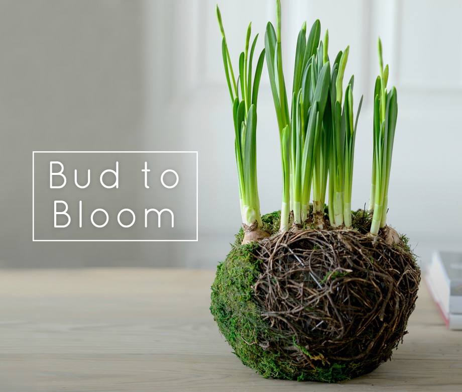 Bud to bloom