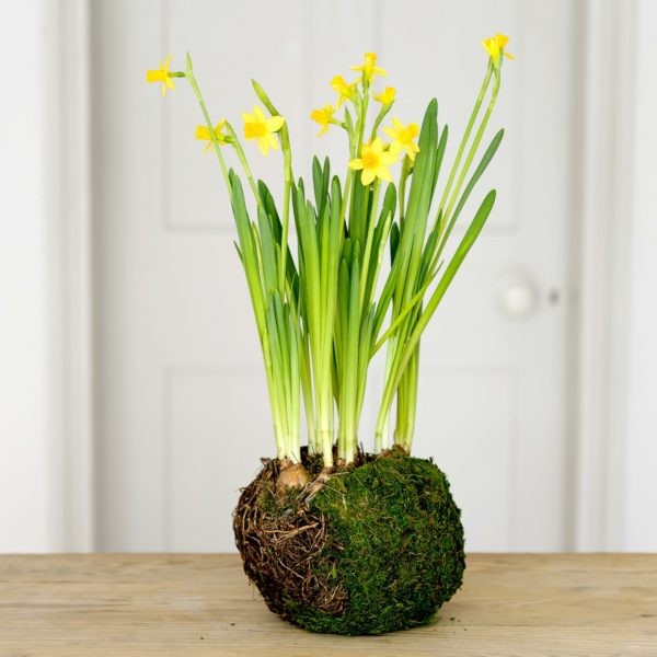 BIRD-NEST-SPRING-BULBS-2-600x600