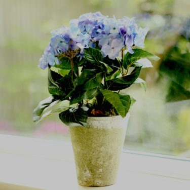 ARTIFICIAL LITTLE BLUE HYDRANGEA IN CLAY POT