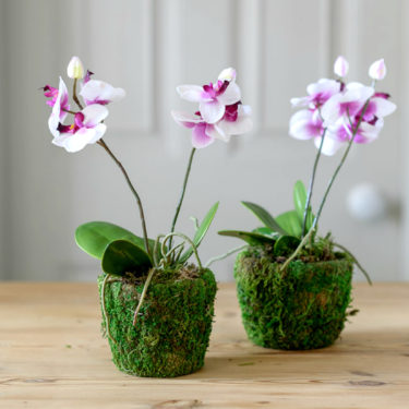 ARTIFICIAL LITTLE ORCHID IN MOSS POT