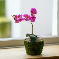ARTIFICIAL LITTLE PINK ORCHID IN MOSS POT WITH SPANISH MOSS