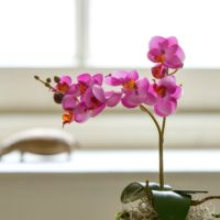 LITTLE ARTIFICIAL FAUX CERISE PINK ORCHID IN MOSS POT