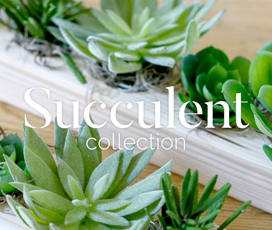 Succulents from the Flower Studio