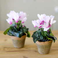 FAUX CYCLAMEN POTTED PLANT