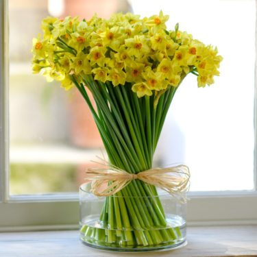 WINTER ENGLISH GROWN NARCISSUS 100 STEMS