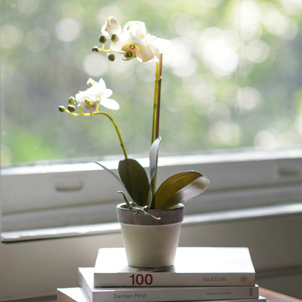 Little-table-top-white-potted-orchid