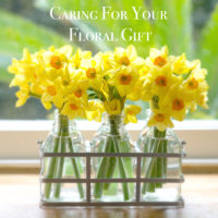 SUNSHINE-NARCISSI-FLOWER-BOTTLES-2 copy