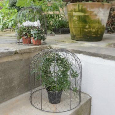 SMALL & LARGE WIRE PLANT CLOCHES
