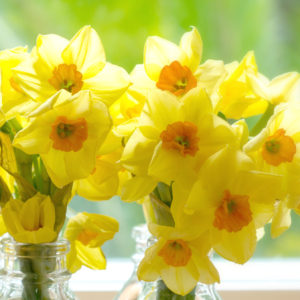 SPRING-SUNSHINE-NARCISSI-FLOWER-BOTTLES
