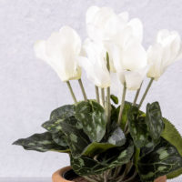 FAUX WHITE CYCLAMEN PLANT