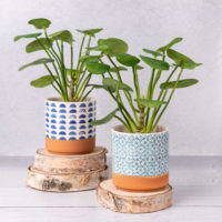 FAUX CHINESE MONEY PLANT IN PATTERN POT