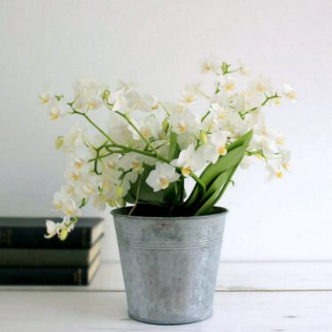 original_little-wild-orchid-plant (1)