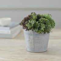 MIXED SUCCULENTS IN SMALL VINTAGE BUCKET