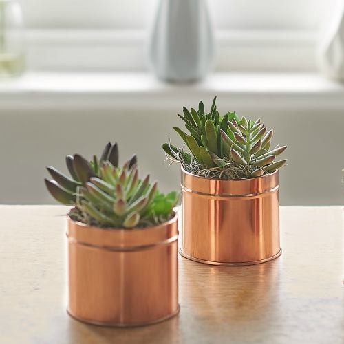 Succulent Faux ~ Mixed Cacti Copper Tin