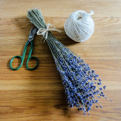 Dried Flowers ~ Lavender Bunch