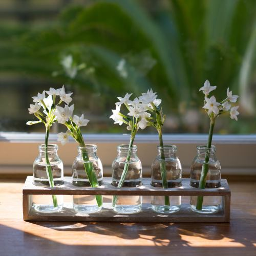Glass Bottles ~ Rustic Tray of 5 Vases