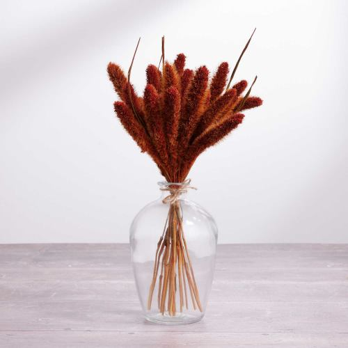 Dried Flowers ~ Little Bunny Tail Jar