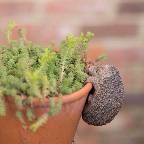 Pot Hanger ~ Little Garden Hedgehog