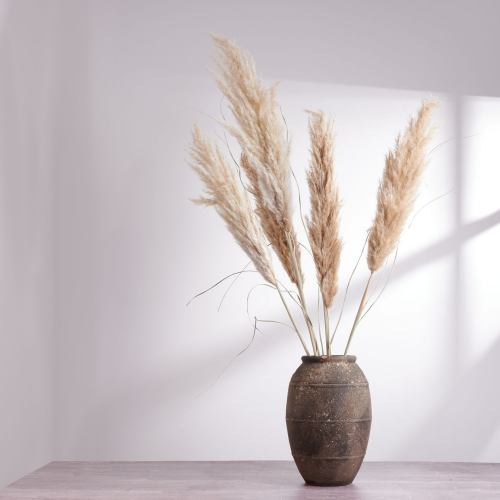 Dried Flowers ~ Pampas Grass Stem